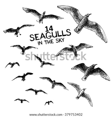 14 seagulls in the sky ...