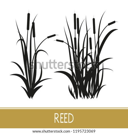 Sedge, reed, cane, bulrush. Set. Black silhouette on white background. Сток-фото ©