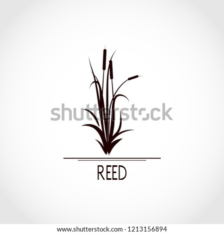 Sedge, reed, cane, bulrush. Set. Black silhouette on white background. Logo, emblem, sign, symbol Сток-фото ©