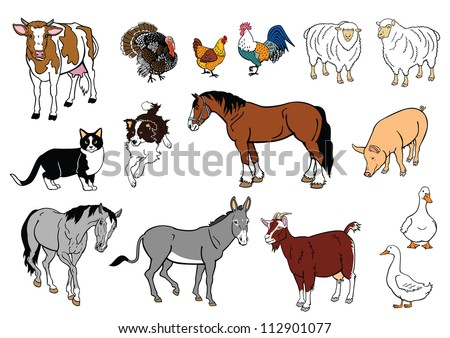 set of  farm animals, vector images isolated on white background,domestic livestock