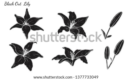 Set of Lily vector by hand drawing.Beautiful flower on white background.Black spider art highly detailed in line art style.Asiatic Lily tattoo for paint or pattern.