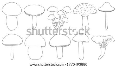 set of mushrooms vector black