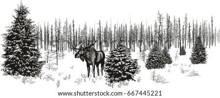 Siberian moose in winter forest.