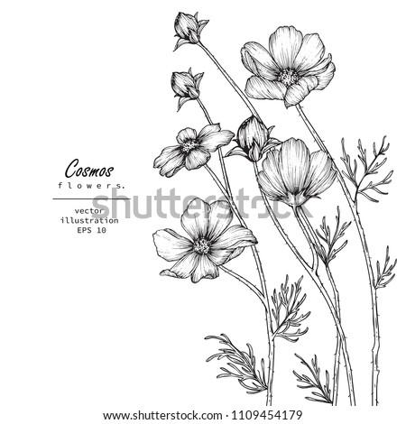 sketch floral botany