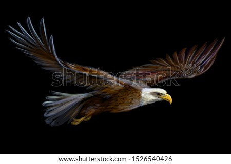 soaring bald eagle graphic