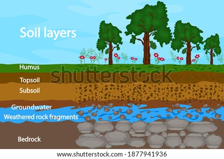 Soil layers. Diagram for layer of soil. Soil layer scheme with grass, earth texture, groundwater and stones. Cross section of humus or organic and underground soil layers beneath. Vector illustration