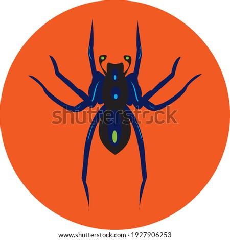 spider vector stock