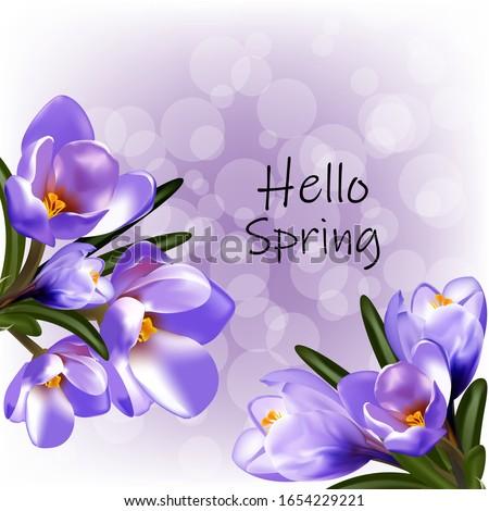 spring hello  early crocus
