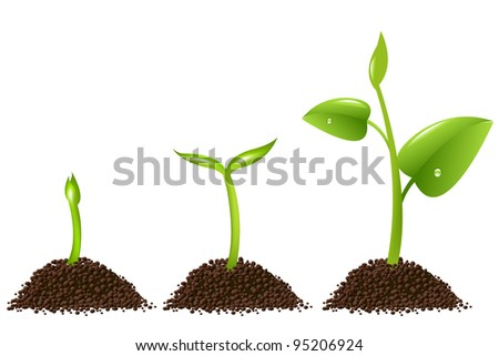 3 Sprouts Isolated On White Background, Vector Background