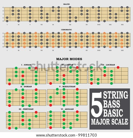 5 string bass basic major scale for bass player teacher and student stock vector illustration. Black Bedroom Furniture Sets. Home Design Ideas