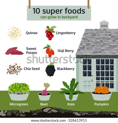 10 super foods can grow in