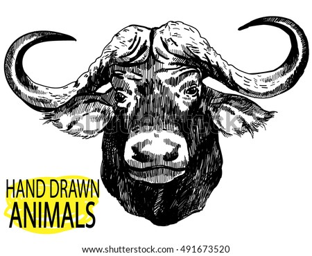 c3f0ec0ac Luxury wings · The head of the African buffalo. Drawing by hand in vintage  style.