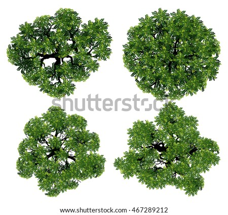 tree top view from realistic Trees top view for landscape vector