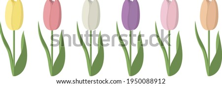 6 tulips in different colours