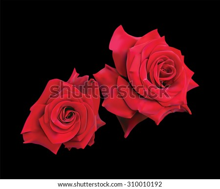 two beautiful red roses