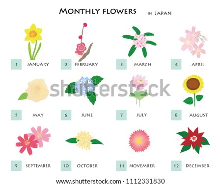 12 types of flowers illustration