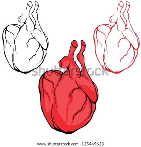 Human Heart Vector Image Valentine Love Heart Vector
