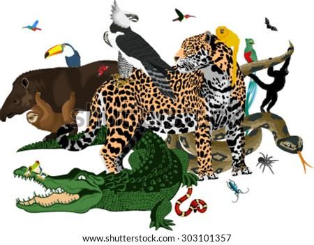 vector amazon rainforest