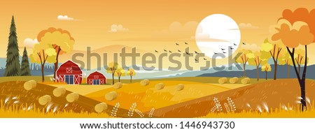 Vector Autumn panorama landscape farm field with orange sky, Beautiful sunset in Autumn countryside panorama view with yellow foliage,Fall season with copy space for banner background