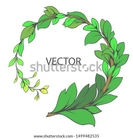 Vector decorative branch. Vegetable ornament.Green branch with leaves.Vector branch. Vector decorative branch, green liana with foliage. Floral ornament.