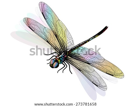 vector dragonfly isolated and