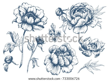 vector floral set with peonies and leaves, flower buds. Linear vintage graphics. sketch. ink drawing, imitation of engraving.