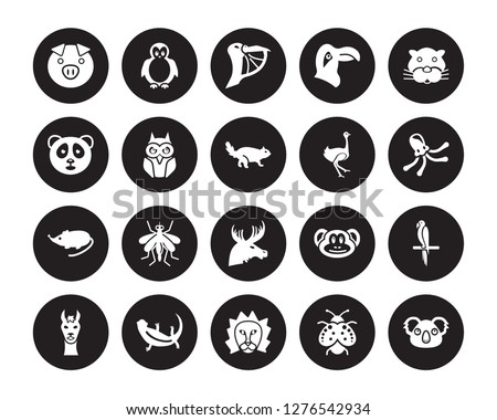 20 vector icon set   pig