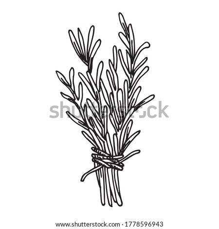 vector illustration in vintage style. a bunch of herbs, sprigs of rosemary, lavender. black and white line drawing, magical herbs, unconventional medicine. shamanism, quackery. Stock photo ©