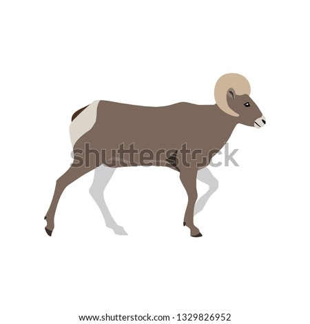 Vector bighorn free vector download (2 Free vector) for commercial