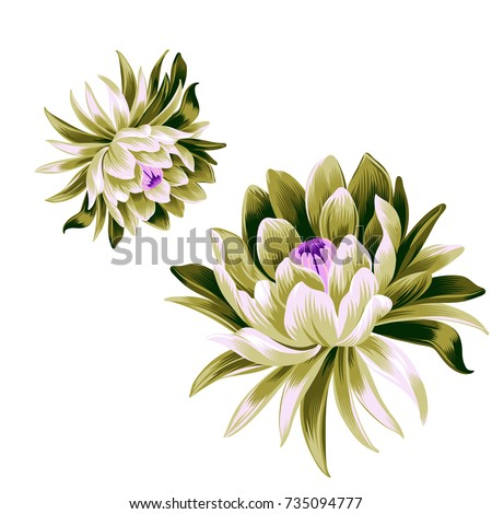 2 vector lotus flower illustrations, isolated on white. Detailed vector botanical illustration. Flora wall sticker and decor. large beautiful lotus flower.
