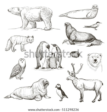 vector sketches of animals
