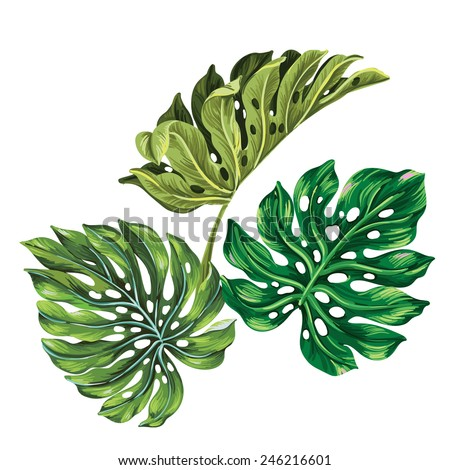 3 vector tropical palm leaves