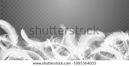 vector white feathers
