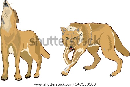 2 vector wolves isolated on