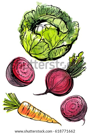Vegetables painted with watercolors and ink on white background. Vector sketch food. Cabbage, beet, carrot.