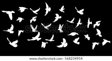 white silhouette flying birds