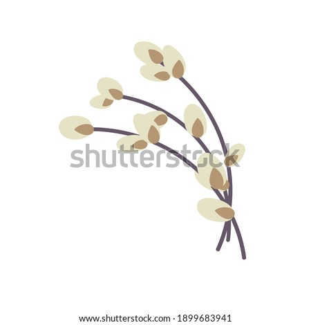 willow twig isolated on a