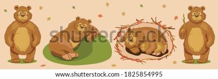 A bear sleeps sweetly on a hill in summer under a tree. Good brown bear. A bear with a bear cub sleeps in a den in the winter in an embrace. Ursa. Winter hibernation of bears