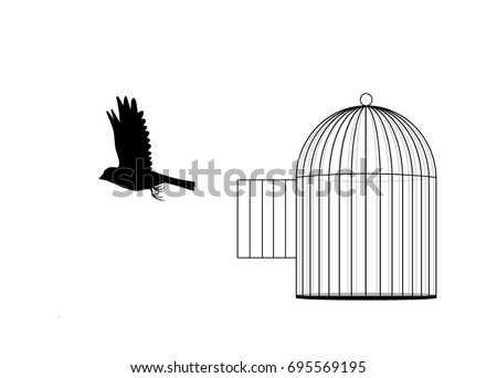 a bird flies out of cage