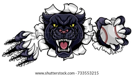A black panther angry animal sports mascot holding a baseball ball and breaking through the background with its claws