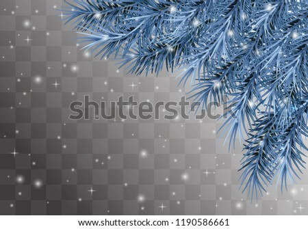 a blue frozen pine   tree