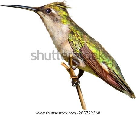 a brown and green hummingbird