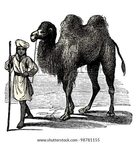 "A Camel and his driver - vintage engraved illustration - ""Dictionnaire encyclop�©dique universel illustr�©"" By Jules Trousset - 1891 Paris"