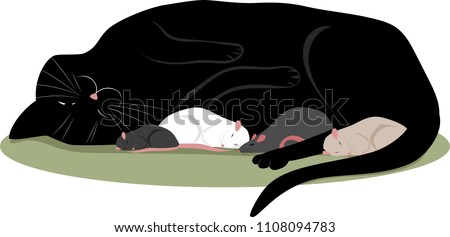 a cat sleeping with a mouse