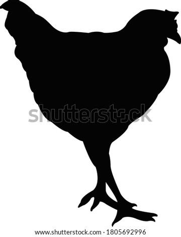 a chicken body silhouette vector