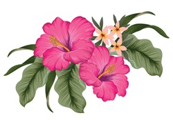 A cluster of tropical Hibiscus flowers with jungle leaves. Vector illustration.