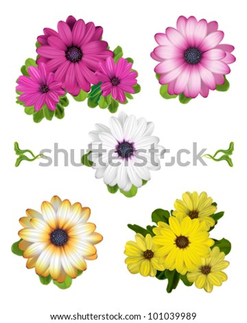 A collection of African Daisy vector illustrations.  Dark Pink, Pale Pink, White, Yellow and Orange White Daisies.