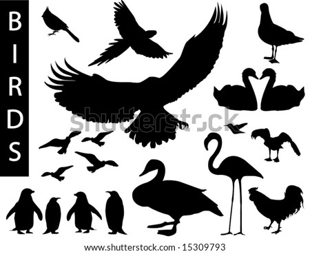 A collection of bird silhouettes-Check out my portfolio for other collections.