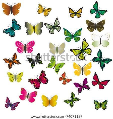 A collection of colorful butterflies. Vector illustration