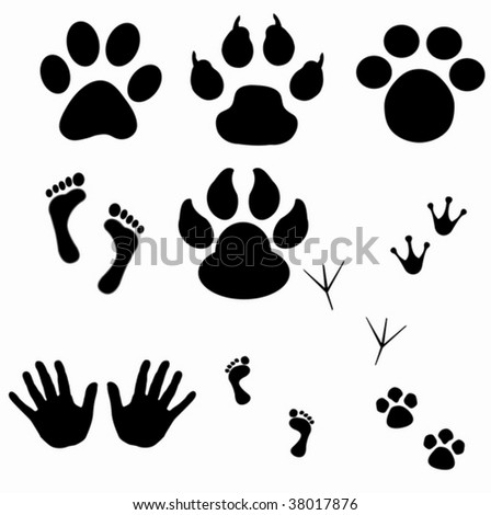 A Collection Of Vector Fingerprints, Footprints And Paw Prints